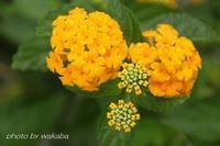 元気の出るオレンジの花(^^♪ - 自然のキャンバス