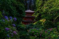 岩船寺の紫陽花 - 鏡花水月