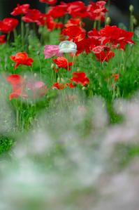 思い出の花たちへ - 気ままにお散歩