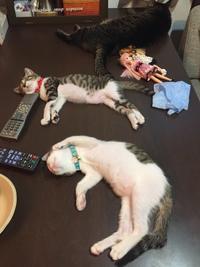うちの猫も… - ステキな暮らしLabo.