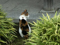 Happy Caturday - きのう・今日・あした