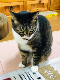 久々のフラッシュバック中 - いぬ猫フェレット&人間
