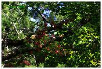 2019年今日の1枚休日の楽しみ自然公園2 - カメラ好き、写真好き