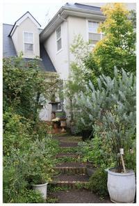 夏の森のような庭 - natu     * 素敵なナチュラルガーデンから~*     福岡で庭造り、外構工事(エクステリア)をしてます