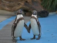 梅雨のペンギンヒルズ - bonsoir
