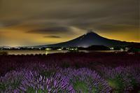 ラベンダー - 富士山に夢中