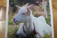 山羊を探して奥会津一周旅 - 福島県南会津での山暮らしと制作(陶芸、木工)