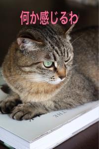 にゃんこ劇場「耳レーダー!」 - ゆきなそう  猫とガーデニングの日記