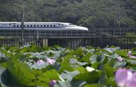 京都へ行きたい - バリ島大好き