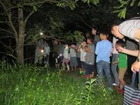 夏の夜の生きものたち - 千葉県いすみ環境と文化のさとセンター