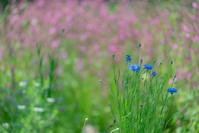 思い出の花たちへ 2 - 気ままにお散歩