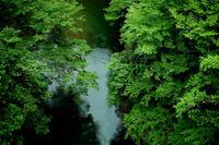 濃い緑の渓谷、みどりの稲・・・そして、みどりの窓口 - 朽木小川より 「itiのデジカメ日記」 高島市の奥山・針畑からフォトエッセイ