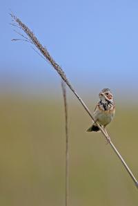 虫咥え、ばっかりです。 - 季節の野鳥~Wildbirds archives
