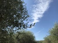 キャンティ地方、ブドウ7月中旬の生育日記2019 - フィレンツェのガイド なぎさの便り
