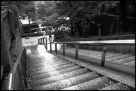 湯島 -13 - Camellia-shige Gallery 2