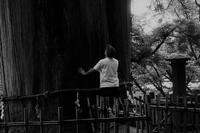 三本杉 - フォトな日々