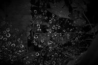 罠にかかった水滴 - フォトな日々
