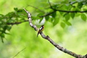 T森林植物園にて① - 季節の映ろひ