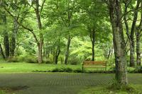 緑陰のベンチ - 風の彩り-2