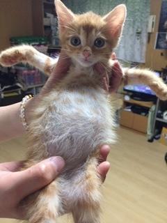 子猫がポンポコリン。 - 青梅にゃんにゃん・サークル「WISH」