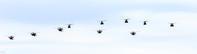 2018.10.08陸上自衛隊朝霞訓練場 - 基地祭/航空祭/飛行場