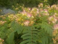 合歓の木の花 - 日頃の思いと生理学・病理学的考察