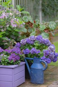purple気分で^^ - 気ままにお散歩