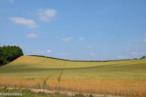 青空と麦の畑~7月の美瑛 -