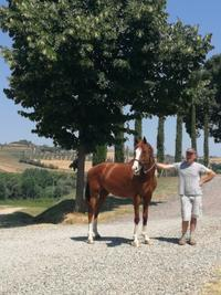 暑い夏 - Life in Tuscany...トスカーナのワイナリーで美味しい生活