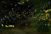 ヒメボタル光る里 - katsuのヘタッピ風景