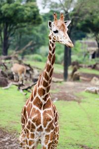 よこはま動物園ズーラシア2019年7月17日その1 - お散歩ふぉと2