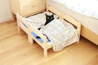 IKEAの猫ベッド、その後 - きょうだい猫と仲良し暮らし