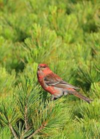 変わり映えしません。 - 季節の野鳥~Wildbirds archives