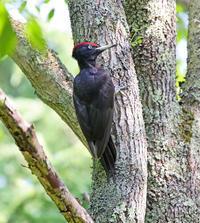 巣立ちを促します。 - 季節の野鳥~Wildbirds archives