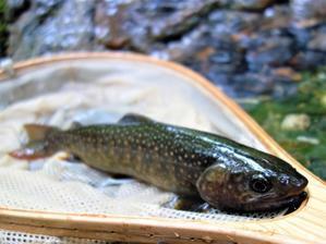 午後は釣りの時間です。 - やまあそび、かわあそび、天気曜々