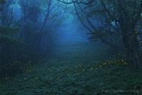 森のともしび - 遥かなる月光の旅