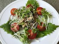 鯖缶サラダ - やせっぽちソプラノのキッチン2