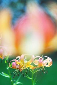 7月21日今日の写真 - ainosatoブログ02
