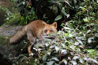 よこはま動物園ズーラシア2019年7月17日その2 - お散歩ふぉと2