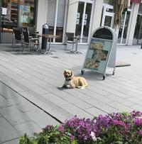 リード無しで店外待機するワンちゃん - ドイツの森の散歩道