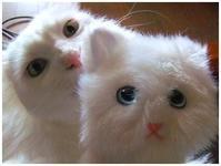 白猫ポーチと誕生日 -  one's  heart