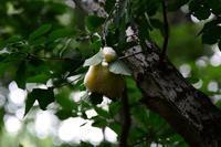 モリアオガエル泡の巣とオタマジャクシ・・・赤城自然園 - 『私のデジタル写真眼』