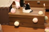 猫箱ブーム - ときどき☆タス