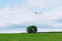 癒やしの木~旭川空港~ - 自由な空と雲と気まぐれと ~from 旭川空港~