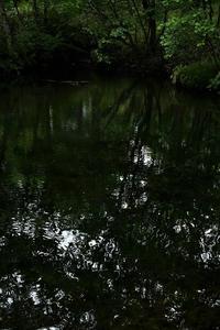 八ヶ岳高原を散歩① - 光画日記2