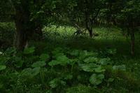 八ヶ岳高原を散歩② - 光画日記2