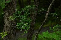 八ヶ岳高原を散歩⑤ - 光画日記2