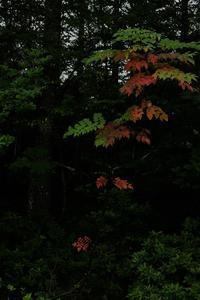 八ヶ岳高原を散歩⑥ - 光画日記2