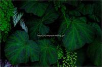 Tropical leaves - りゅう太のあしあと