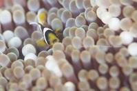 ビビってる!? - Diving Life ~Aita pe'a pe'a~